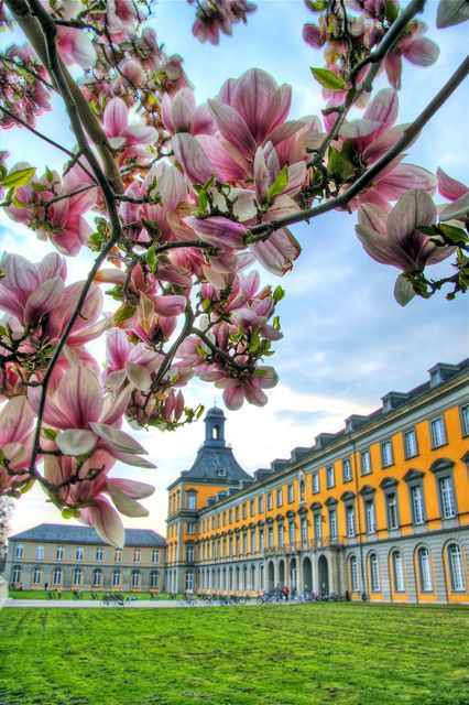 Magnolia in Bonn, Germany.... IM GOING TO STUDY IN THIS BUILDING IN AUGUST :D SO EXCITED!