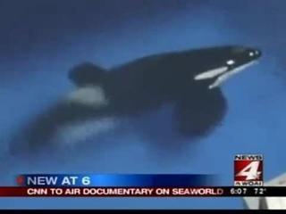 CNN to air 'Blackfish' documentary on SeaWorld whales - Video Dailymotion