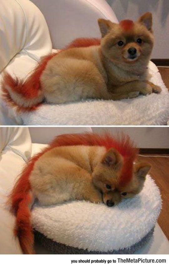 Firefox Dog