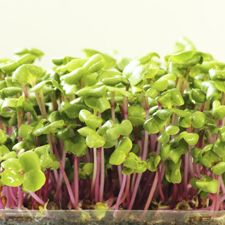 What Are Microgreens? - Ask Dr. Weil