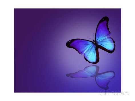 Morpho Blue Butterfly on Dark Blue Background Affiches par suns_luck sur AllPosters.fr