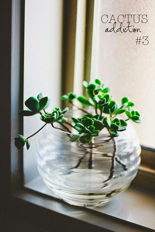 17 meilleures images propos de deco plantes interieur for Interieur gov