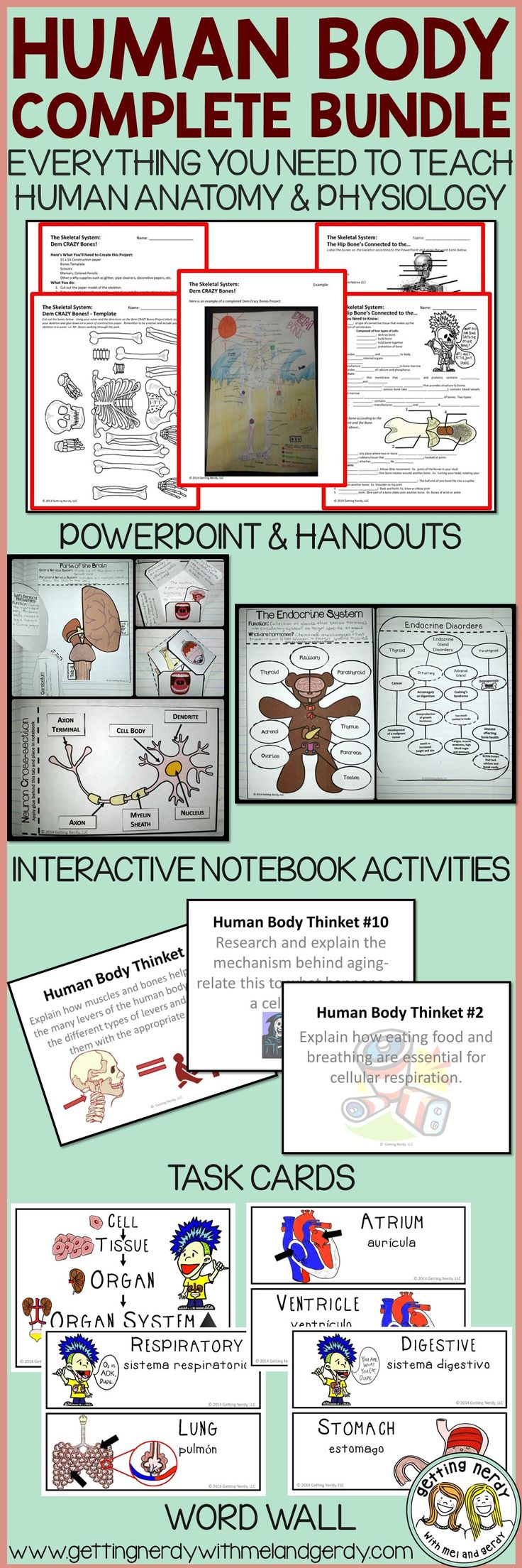 This was such a time saver - everything I needed to teach the human body in my science class was right here.