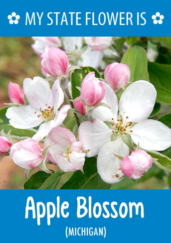 Michigan 39 S State Flower Is The Apple Blossom What 39 S Your