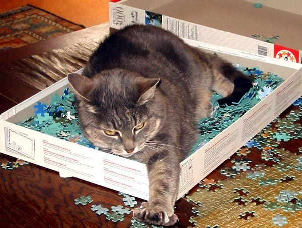 Cat In A Jigsaw Puzzle Box Image Posted By Mary Ruston