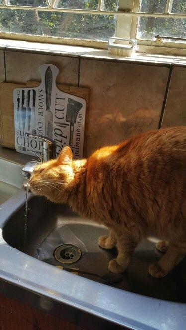 In the kitchen sink