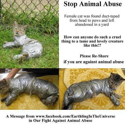 STOP THE ANIMAL ABUSE