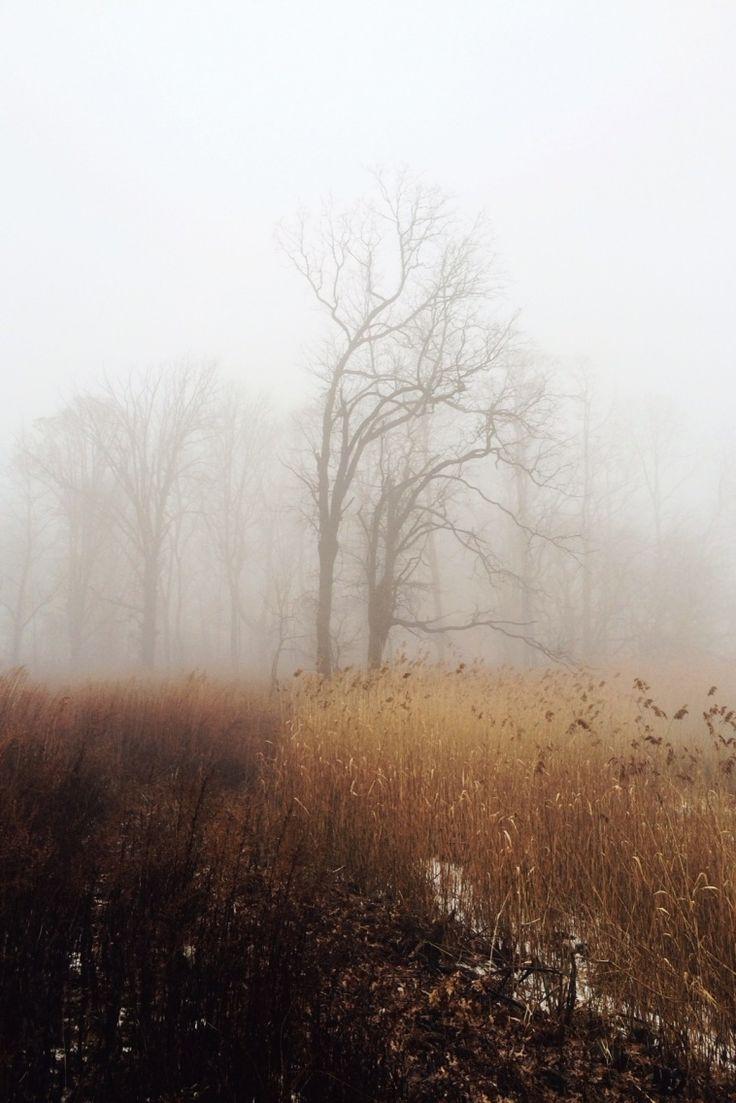 A misty, autumnal morn'...