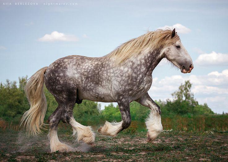 113 best images about Draft horses on Pinterest | Dutch ...