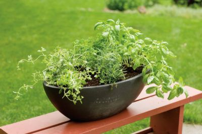Growing Herb Plants Together: Best Herbs To Grow Together In A Pot - Mixing herbs in a pot isn't as easy as it sounds. There are some general rules of thumb when growing herb plants together. Click this article to find out what herbs will grow in one pot and other helpful information about growing herb plants together.