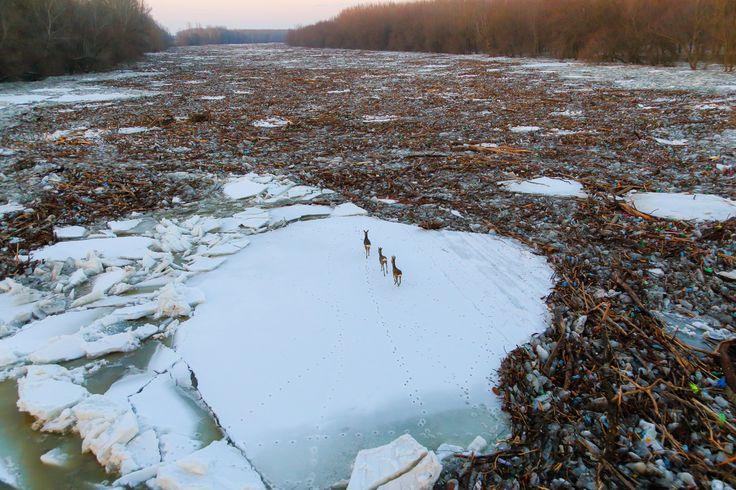 Drámai képek érkeztek a tiszai jeges árvízről! | Az online férfimagazin