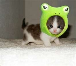 Kitten wearing frog hat. So cute!