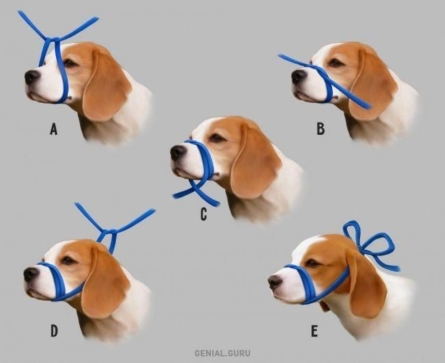 Pin By Dog Grooming Salon Ideas On Dog Grooming Dog Grooming Shop Dog Grooming Salons Dog Grooming Styles