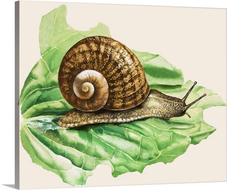 garden snails - Google Search | Snails in garden, Slugs in ...