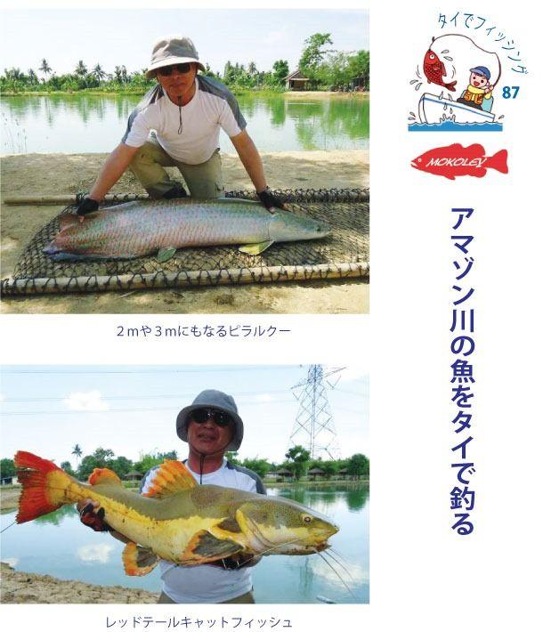 アマゾン川の魚をタイで釣る