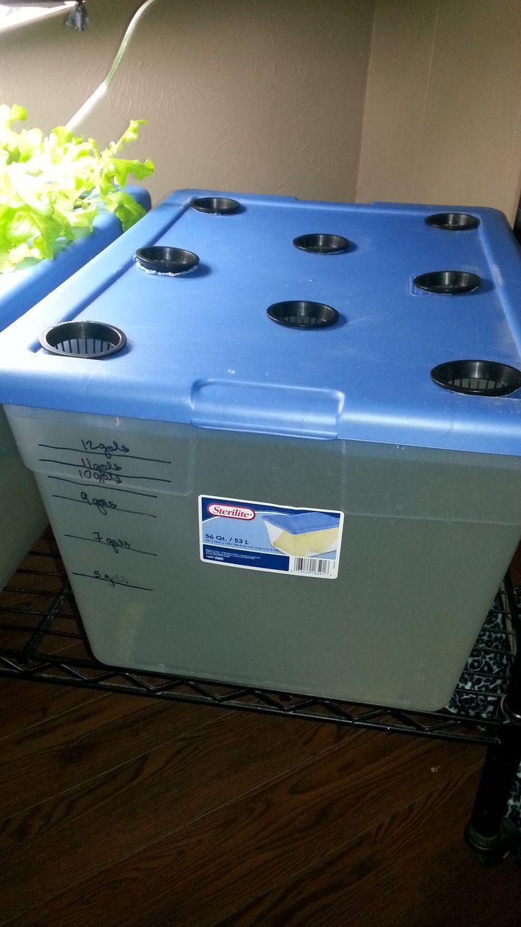 Hydroponics setup using the BA Kratky method