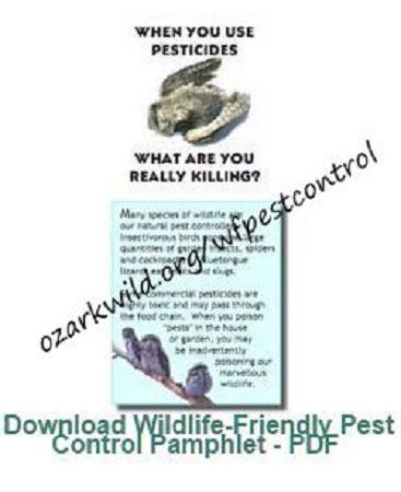 WHEN YOU USE PESTICIDES, WHAT ARE YOU REALLY KILLING? | WildLife_Rules!