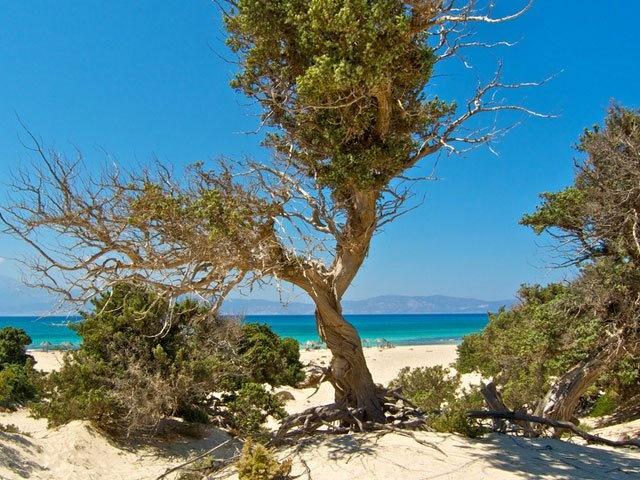 Chryssi islet  in  Crete is Paradsise   SE Crete  www.chrissi-island-crete.com