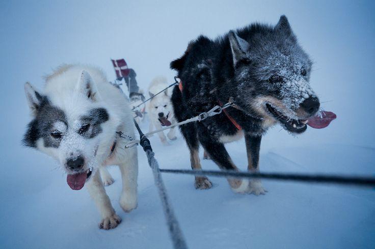 Groenland : rencontre avec une patrouille militaire en traîneaux à chiens. Au fin fond du royaume danois, la légendaire unité d'élite Sirius veille sur les 14 000 km du littoral nord-est du Groenland. - National Geographic France