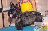 Banho e tosa em cães: comandos