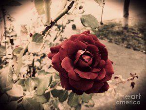Red Rose Retro Style
