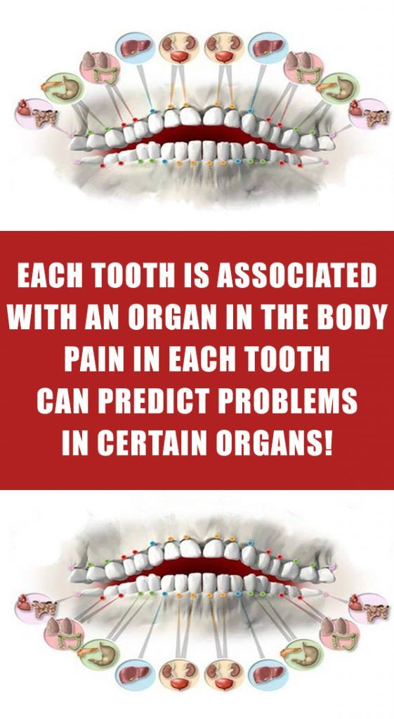 Each Tooth Is Associated With An Organ In The Body Pain In Each