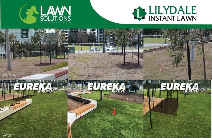 Transformation Tuesday! Check out this amazing commercial projects before and after pictures. We replaced the previously installed turf with the high grade Lawn Solutions Australia's Eureka Kikuyu instant turf grown by our Lilydale Instant Lawn team. | Lilydale Instant Turf | Love your lawn | Great grass | Lily & Dale | Follow us | Garden Tips & Advice | Contact us | Lawn Solutions Australia