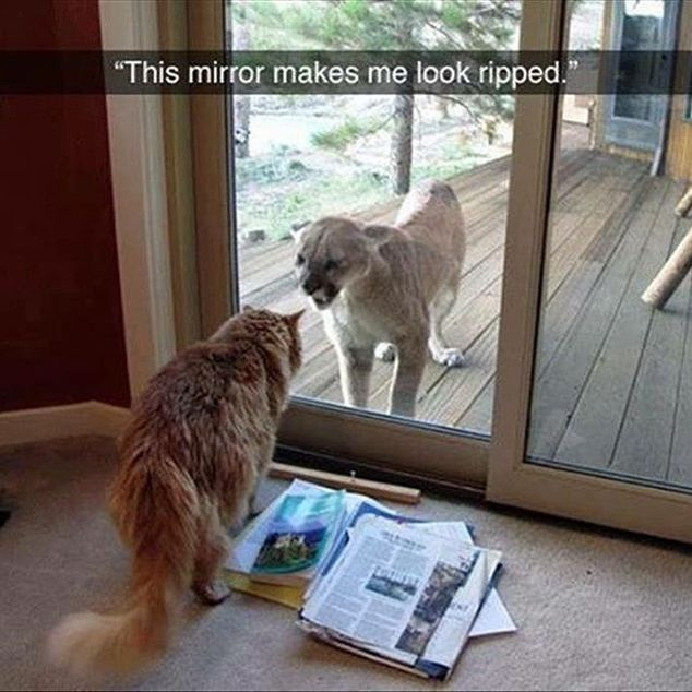 Animals Looked At Their Reflection - 20 Funny Pictures