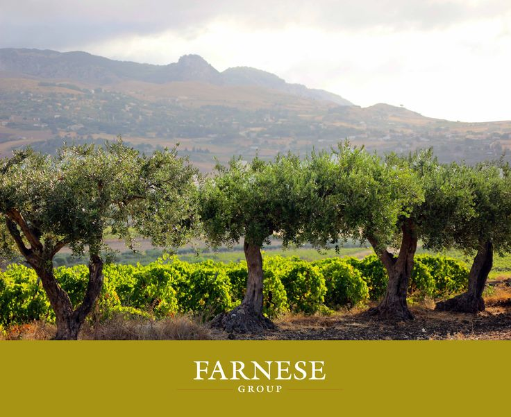Cura e attenzione nei #vigneti. Focus su equilibrio ed eleganza in #cantina. #Rossi complessi e concentrati. #Bianchi vivaci, minerali, puri. Questo, in breve, il nostro stile.  Care and attention in the #vineyards. Focus on balance and elegance and #winery. Rich, concentrated red #wines. Vibrant, mineral and clean whites. That's, in brief, our style.  #Farnesevini, #Farnese, #vino, #wine, #italianwine, #harvest2014, #vendemmia2014
