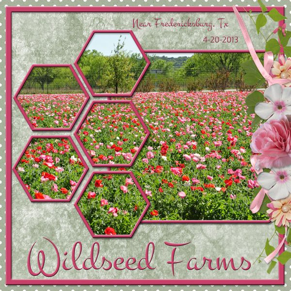"""Wildseed Farms"" digital scrapbooking layout made by CT artist poki featuring digital scrapbooking kit WINTER GARDEN by ADB Designs. The kit will add a splash of color and a pop of nature to any scrapbook layout! Available at Go Digital Scrapbooking http://www.godigitalscrapbooking.com/shop/index.php?main_page=index&cPath=234_478_480&sort=20a&filter_id=171&alpha_filter_id=0"