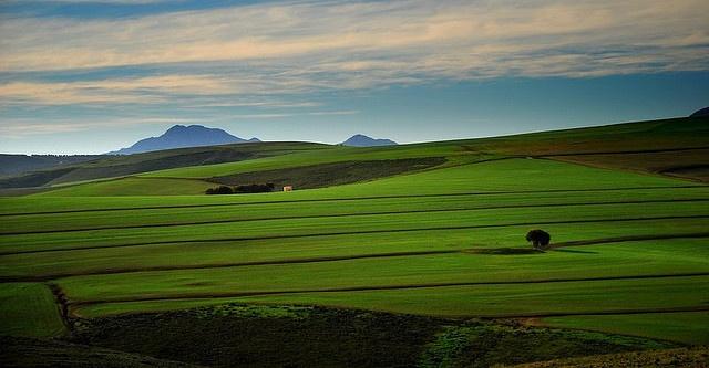 Wheatfields, South Africa