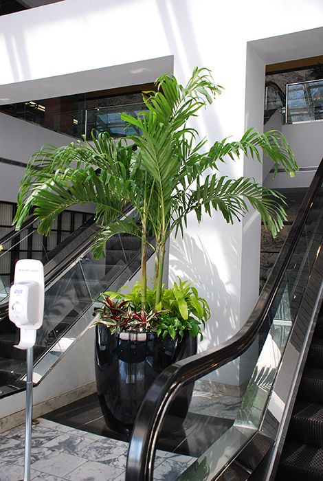 1000 Ideas About Office Plants On Pinterest Best Office Plants Interior Plants And Offices