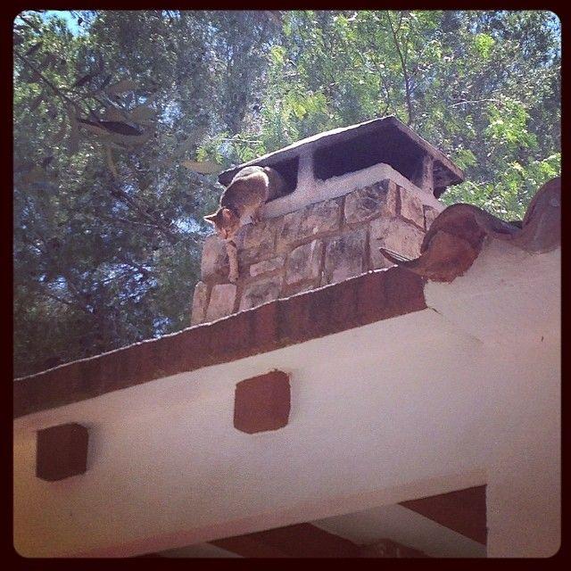Mi #gato saliendo de la chimenea #brian