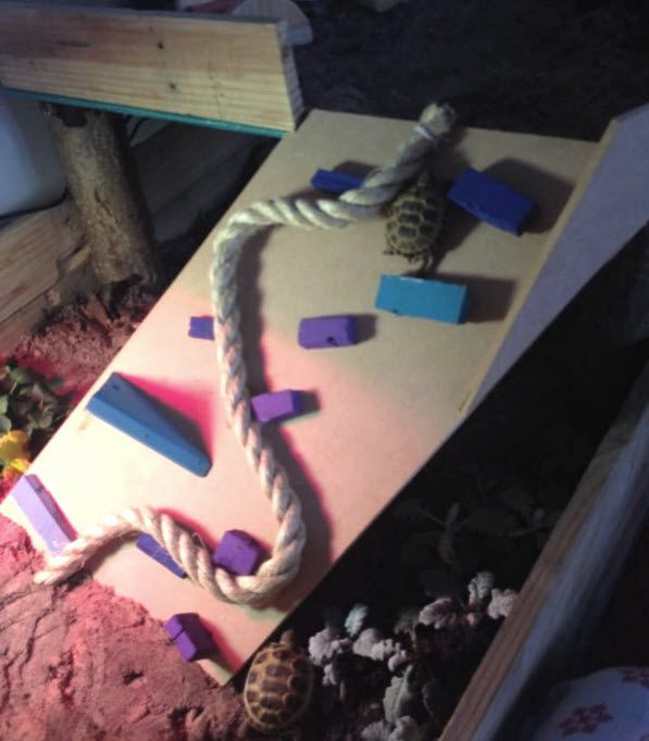 DIY Tortoise Obstacle Ramp - helping to keep your tortoise fit! PetDIYs.com