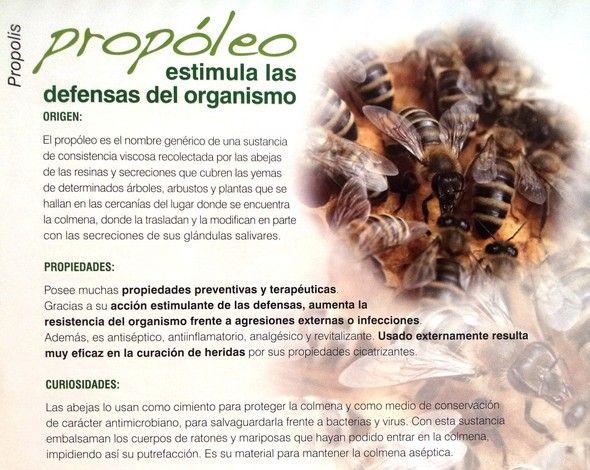 Propóleo, poderoso antibacteriano natural