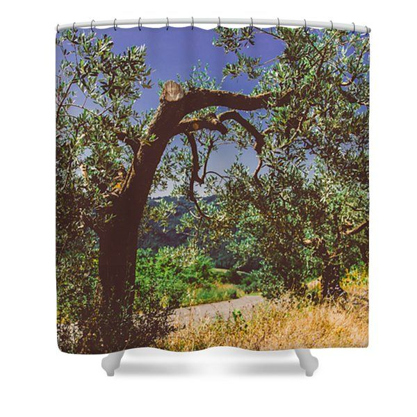 Portrait Of An Olive Tree Shower Curtain by Cesare Bargiggia