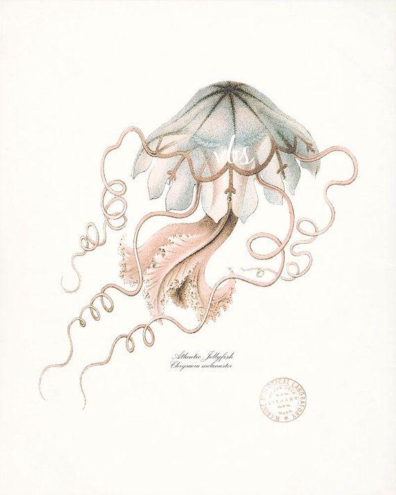 Vintage Atlantic Jellyfish Natural History by vintagebytheshore, $14.00