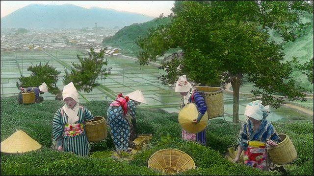 約100年程昔に日本茶の一大生産地・静岡の茶畑や製茶工場が撮影されたとても貴重なカラー復元写真です。春の季語ともなっている茶摘女(ちゃつみめ)たちによる茶摘みの様子や、ほとんどが手作業で行われている工...