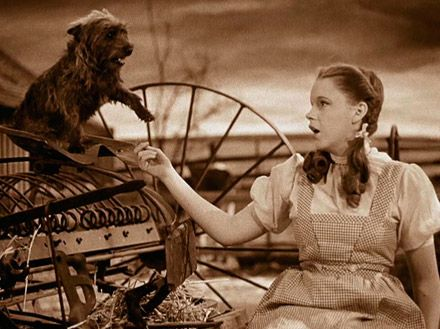 Toto & Dorothy from The Wizard of Oz    -      Her voice was so perfect at this point. Beautiful song!