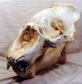 Skeletons and Skulls Superstore
