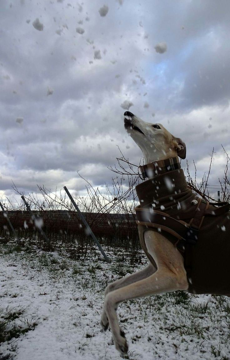 Chasing the falling snow!