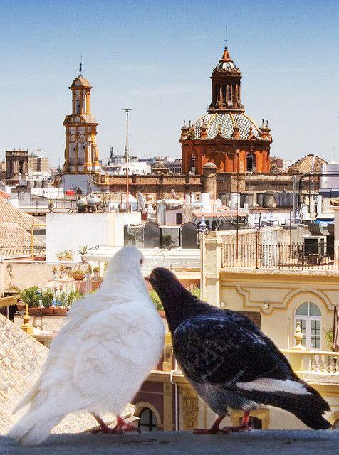 La Giralda, Sevilla, Spain - a beautiful country with very warm citizens.