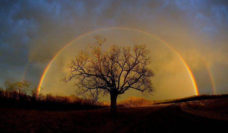 Rainbow over Elm tree: Lights, God, Missouri, Natural Beautiful, Double Rainbows, Trees Of Life, Heart Broken, Photo, Be Awesome
