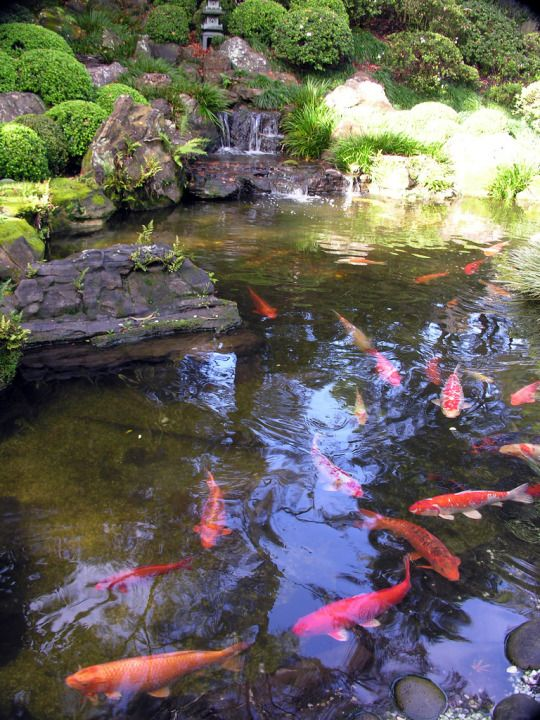 Let the young hearts burst open divine contemplation for Fish ponds sydney
