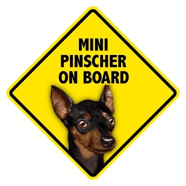 Captivating Canines   Miniature Pinscher Pet On Board Sign - Westerville, OH