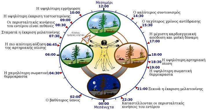 Κιρκάδιος ρυθμός - Βικιπαίδεια