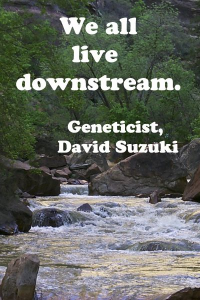 """We all live downstream.""  Award-winning geneticist, David Suzuki. -- More nature quotations at http://www.examiner.com/article/twelve-essential-nature-quotations -- image is Zion River in Zion National Park;   #quotations, #nature: Suzuki Quotation, David Suzuki, Geneticist David, Nature Quotations, Sink"