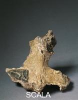 ******** Preistoria, Italia, Paleolitico. Particolare di uno scheletro di tipo di Cro-Magnon, proveniente della triplice sepoltura della Barma Grande nelle Grotte dei Balzi Rossi, nei dintorni di Ventimiglia (Im).