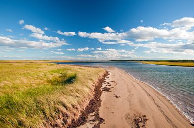 Within an hour of Moncton, you can visit not one, but two national parks. At Kouchibouguac National Park, you can take in sand dunes, lagoons, salt marshes and forests. The park provides habitat for seabirds, including the second largest colony of the endangered Piping Plover, as well as colonies of harbour and grey seals.