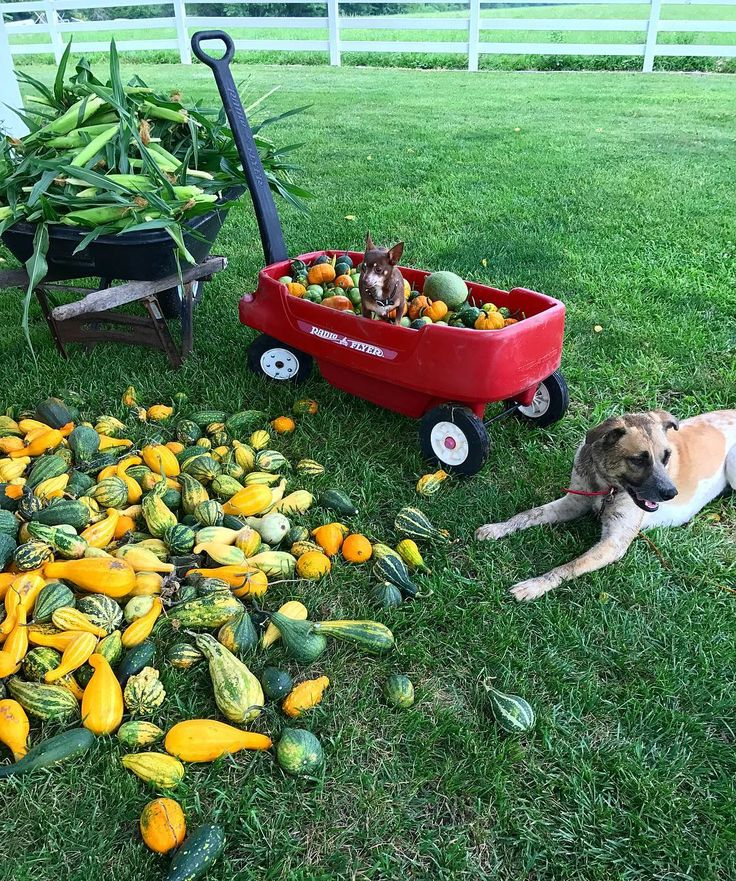 Decorative Gourd Season starts now. #corn #mud #kansas @cherylwilsonofficial